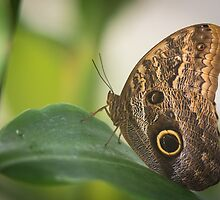 Butterfly by Reese Ferrier