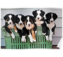 5 pups in a crate Poster