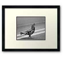 Partridge Crossing the Road Framed Print