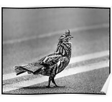 Partridge Crossing the Road Poster