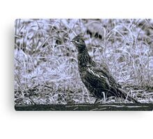 Partridge Across the Road Canvas Print