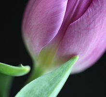Primavera miracle by © Andrzej Goszcz,M.D. Ph.D
