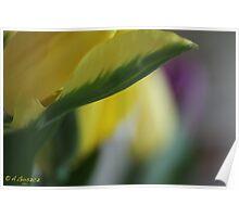 Palette  color creame & Desire Poster