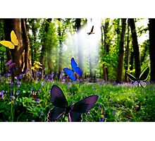 paradise in nature Photographic Print