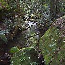 Upstream - Rainforest - NSW - Australia by Bryan Freeman