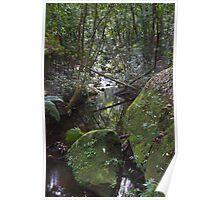 Upstream - Rainforest - NSW - Australia Poster