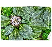 Ground Cover Backyard Poster