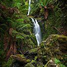 Quaille Falls by Mieke Boynton