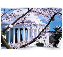 Jefferson Memorial Cherry Blossoms  Poster