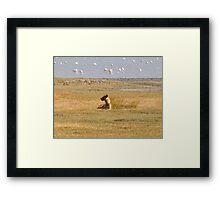 Hyena Watching Framed Print