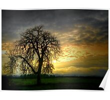 A Wee-Bit of Light ~ Old Oak Tree ~ Poster