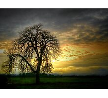 A Wee-Bit of Light ~ Old Oak Tree ~ Photographic Print