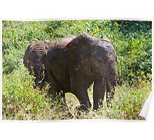 Mud Elephants Poster