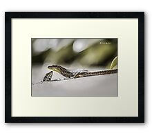 The charming lizards Framed Print