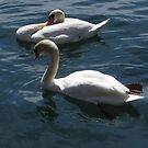 Pair Of Swans In Repose by Marie Van Schie