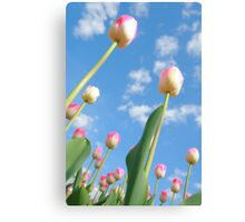 Pink and White Tulips 03 Canvas Print