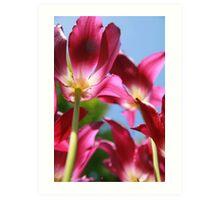 Purple Tulips 03 Art Print