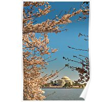 Cherry Blossom at Thomas Jefferson Memorial 3 Poster