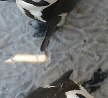 Penguins in South Africa by NinjaGlue