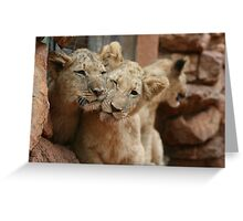 Lion Cubs in South Africa Greeting Card