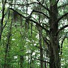 Louisiana Trees 1 by Emily Rose