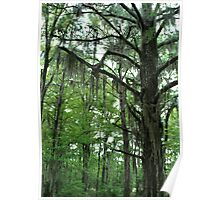 Louisiana Trees 1 Poster