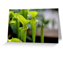 Pitcher Perfect Greeting Card