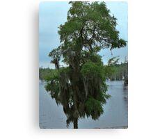 Louisiana Trees 4 Canvas Print