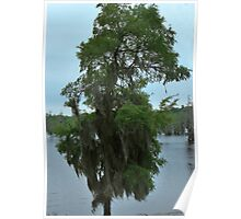 Louisiana Trees 4 Poster