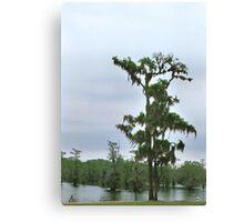 Louisiana Trees 5 Canvas Print