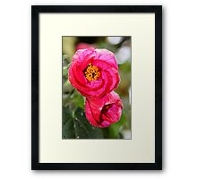 Pink Pulse Framed Print