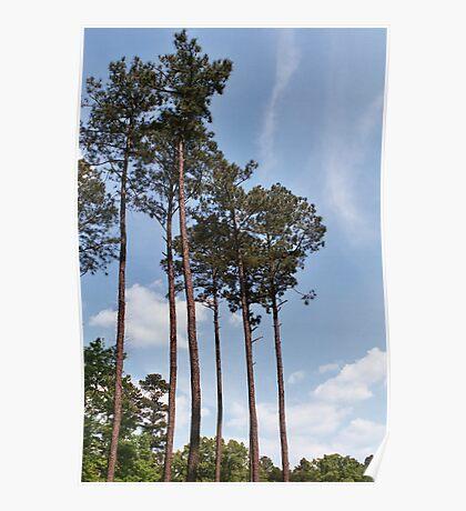 Louisiana Trees 6 Poster
