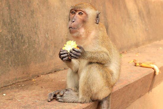 Wild Macaque Monkey - Chilling outside a Budist Temple by Honor Kyne