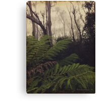 Rainforest No.11 Canvas Print