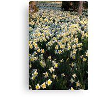 Mottled Daffodils Canvas Print