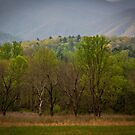 Cades Cove, spring 2014 by photodug