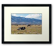 PRAIRIE COWS Framed Print