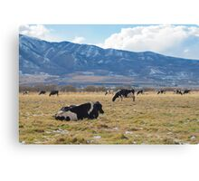 PRAIRIE COWS Canvas Print
