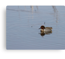 Drake Green-winged Teal 1 Canvas Print