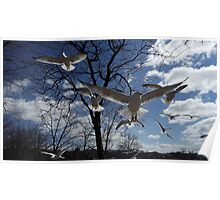 Gull Force Wind Poster
