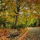A walk in autumn by Peter Hammer