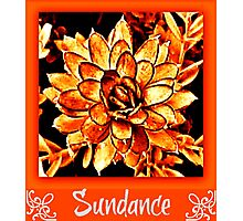 sundance Photographic Print