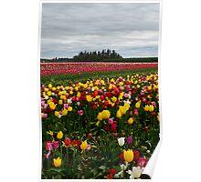 Woodburn Tulip Festival #2 Poster