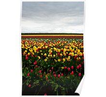Woodburn Tulip Festival #3 Poster