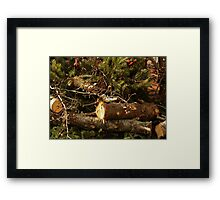 The Sliver Bird Framed Print