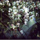 flowers by Barbara Fischer