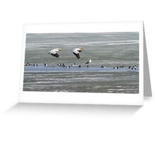 First Arrivals 2014-1 Greeting Card