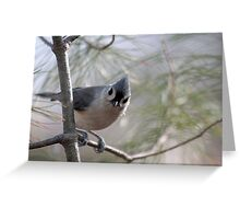 Tufted titmouse perched in a pine tree Greeting Card