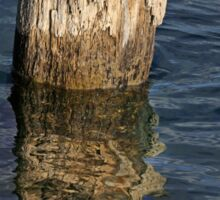Old Piling and Reflection 1 Sticker