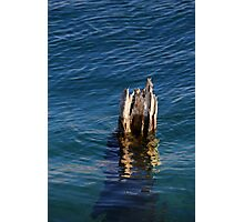 Single Old Piling Vertical 3 Photographic Print